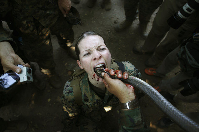 "A U.S. marine drinks the blood of a cobra during a jungle survival exercise with the Thai Navy as part of the ""Cobra Gold 2013"" joint military exercise, at a military base in Chon Buri province, Thailand February 20, 2013. (Photo by Damir Sagolj/Reuters)"