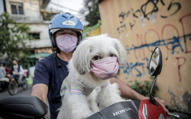 A resident brings his dog that uses a mask in Jakarta, Indonesia, on May 12, 2020. (Photo by Jefta Images/Barcroft Media via Getty Images)
