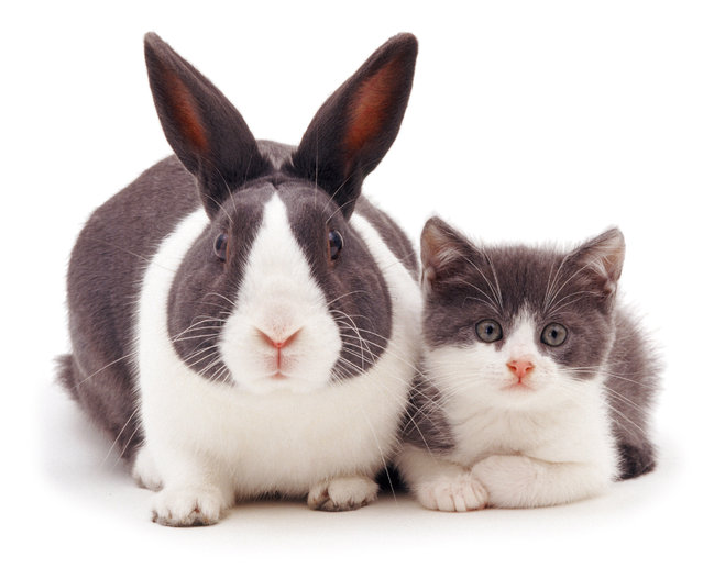 Blue Dutch rabbit and matching kitten. (Photo by Mark Taylor/Warren Photographic/Caters News Agency)
