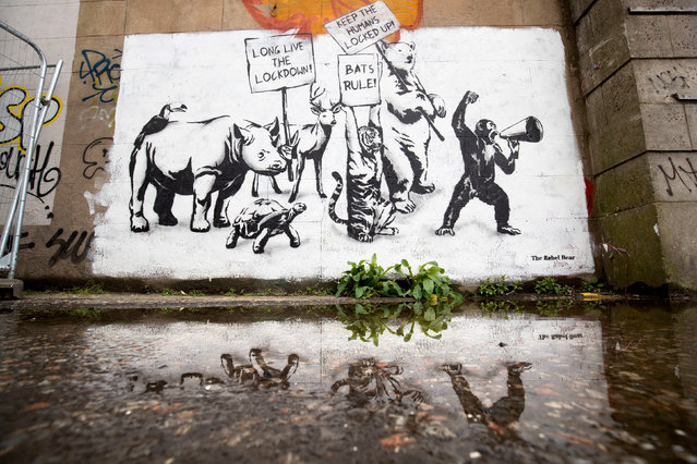 A new piece of street art by The Rebel Bear has appeared on a wall in Leith, Edinburgh on June 3, 2020, as Scotland is moving into phase one of the Scottish Government's plan for gradually lifting lockdown. (Photo by Jane Barlow/PA Images via Getty Images)