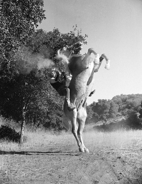 Roy Rogers, cowboy star of the Hollywood screen, rears his famous horse Trigger up short to get this magnificent effect for a scene in their latest film Under California Stars in Los Angeles on September 30, 1948. (Photo by AP Photo)