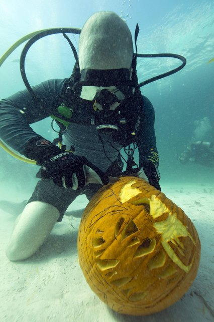 Dan Minnick pares a pumpkin at the Underwater Pumpkin Carving Contest in the Florida Keys National Marine Sanctuary off Key Largo, Florida, October 19, 2014 in this handout photo provided by the Florida Keys News Bureau. (Photo by Bob Care/Reuters/Florida Keys News Bureau)