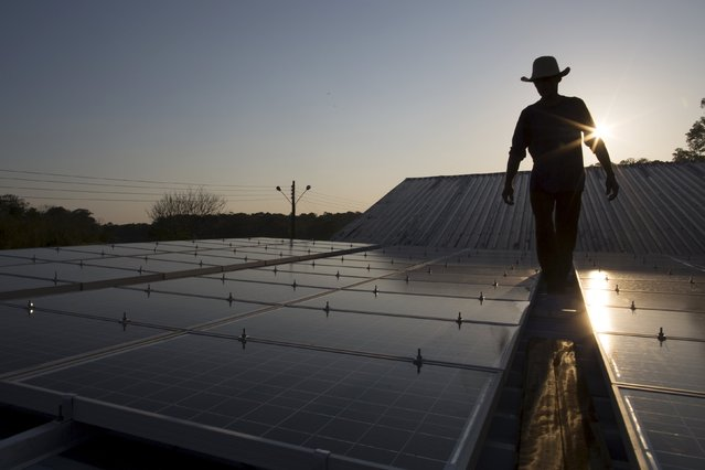 Francisco da Silva Vale, 61, walks between solar panels which power ice machines at Vila Nova do Amana community in the Sustainable Development Reserve, in Amazonas state,  Brazil, September 22, 2015. (Photo by Bruno Kelly/Reuters)