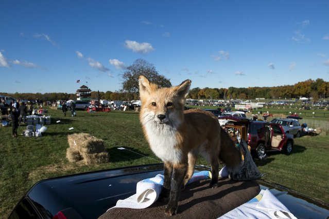 A stuffed fox sits on top of a Sports Utility Vehicle at the Far Hills Race Day at Moorland Farms in Far Hills, New Jersey, October 17, 2015. (Photo by Stephanie Keith/Reuters)