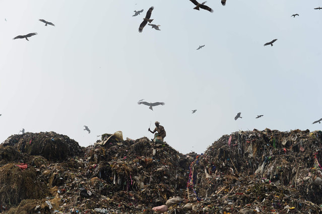 "A man sifts through trash at a massive garbage site in New Delhi on September 27, 2016. Polluted air is a ""public health emergency"", the World Health Organization said September 27, adding nine out of 10 people globally breathe bad air that is blamed for more than six million deaths a year. And the WHO warned that nearly 90-percent of air pollution-related deaths occur in low and middle-income countries. (Photo by Sajjad Hussain/AFP Photo)"