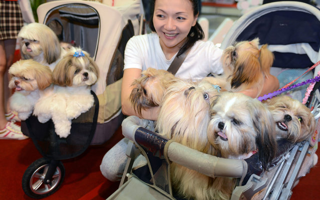 A woman poses with her dogs during the annual pet show at the World Trade Center in Nankang, Taipei on July 25, 2013. According to organizers, this will be the biggest Pets Taipei ever, with the number of participants growing by 35 percent from last year. This year's show will have a total of 850 stalls with everything ranging from the most mundane daily requirements such as pet food and grooming equipment. (Photo by Sam Yeh/AFP Photo)