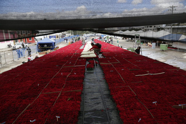 Locals prepare thousands of roses that will be placed on a structure made to resemble the Cochasqui pyramid temple as they try to impose a new category in the Guinness World Record, as the biggest structure made with roses, in Tabacundo, Ecuador, Friday, July 20, 2018. (Photo by Dolores Ochoa/AP Photo)