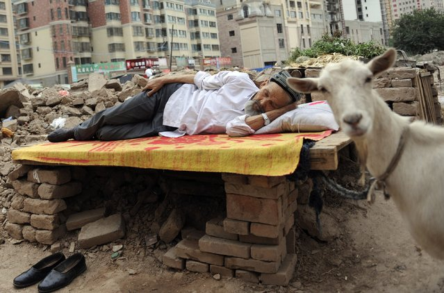 An ethnic Uighur man takes a nap on a board as his sheep, which is tied to the board, stands next to him at a demolition site in Aksu, Xinjiang Uighur Autonomous Region August 13, 2012. (Photo by Reuters/Stringer)