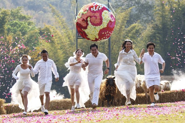 Couples (L-R) Prontathourn Pronnapatthun and Chaiyut Phuangphoeksuk, Daradai Wachirapoothacoon and Artit Thanajindawong, and Nichapatr Koomsombut and Pirat Rungthongoran run from sheep during their wedding ceremony at a resort in Ratchaburi province February 13, 2015. (Photo by Athit Perawongmetha/Reuters)