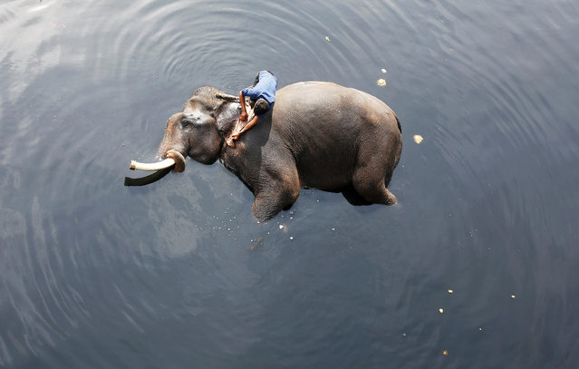 A mahout bathes his elephant in the polluted water of river Yamuna in New Delhi, India, February 6, 2018. (Photo by Adnan Abidi/Reuters)