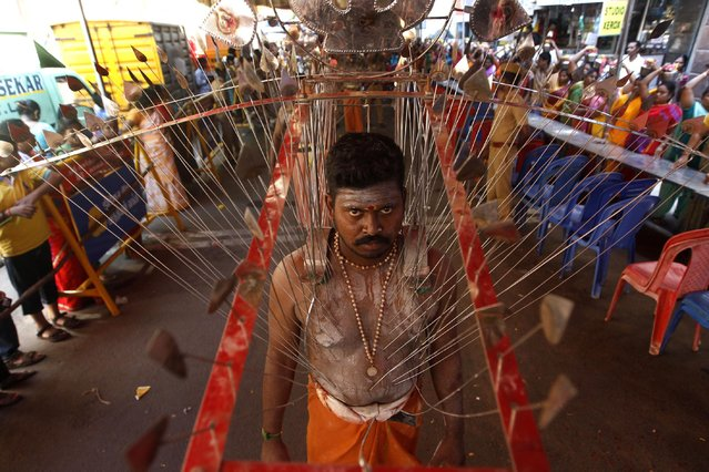 A Hindu devotee, with his body pierced with skewers, participates in a religious procession during Panguni Uthiram festival in Chennai, India, Friday, April 3, 2015. The festival is observed in the Tamil month of Panguni and is celebrated in honor of the Hindu God Murugan where devotees make offerings to lord Murugan with sacrificial feats they believe will keep them away from evil spirits. (Photo by Arun Sankar K./AP Photo)