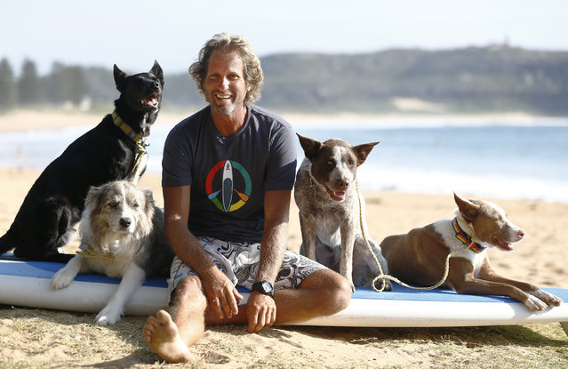 Australian dog trainer and former surfing champion Chris de Aboitiz sits with his four dogs (L-R) Max, Murph, Millie and Rama before riding the surf at Sydney's Palm Beach, February 18, 2016. (Photo by Jason Reed/Reuters)
