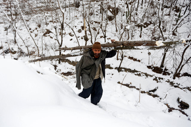 A man carries a log of a tree on his shoulder as he walks on a snow covered hill on a cold winter day at Faqir Gujri, on the outskirts of Srinagar, India January 12, 2017. (Photo by Danish Ismail/Reuters)