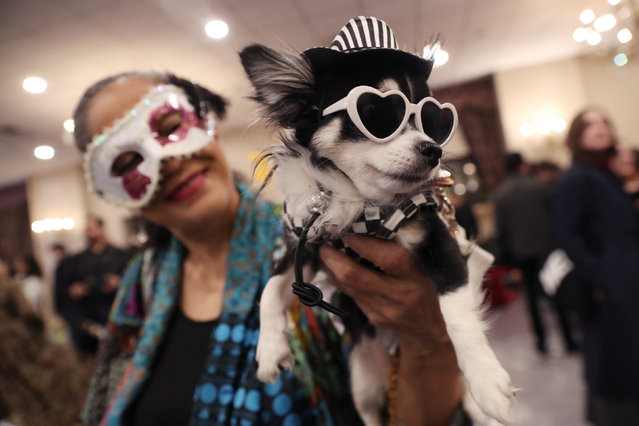 A woman holds a dog backstage at the 16th annual New York Pet fashion show in New York, U.S., February 7, 2019. (Photo by Shannon Stapleton/Reuters)