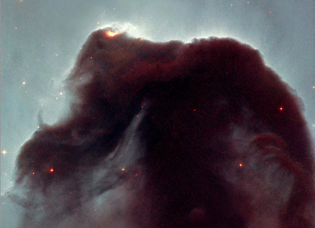 The Hubble telescope took a close-up look at this heavenly icon, revealing the cloud's intricate structure. This detailed view of the horse's head was released April 24, 2001 to celebrate the orbiting observatory's eleventh anniversary. (Photo by Reuters/NASA)