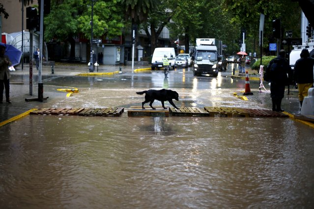 A dog crosses a flooded street in Santiago, April 17, 2016. (Photo by Ivan Alvarado/Reuters)