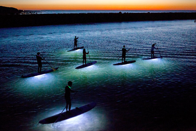 """""""Paddling Dreams"""". Stand up paddle boarders head out on a perfect full moon, windless evening in late September at Sesuit Harbor on Cape Cod. Waterproof LED lights are attached to the bottom of the boards, illuminating the water below which meant the paddlers could see fish passing by. I photographed this from a jetty overlooking the harbor and was stunned by the beauty of it. Photo location: Sesuit Harbor, Dennis, MA. (Photo and caption by Julia Cumes/National Geographic Photo Contest)"""