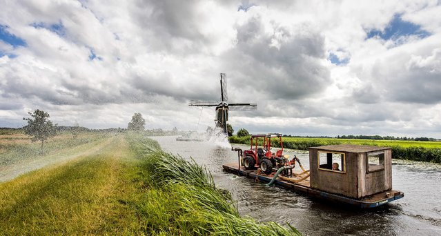 An employee of the Unie van Waterschappen (Association of regional water authorities) sprinkles the peat dikes near Breukelen because of the drought in Wilnis, The Netherlands, 08 July 2015. If it's dry over a long period, the dykes take too little water on and there is a chance that they no longer can handle the weight of river water. (Photo by Koen van Weel/EPA)