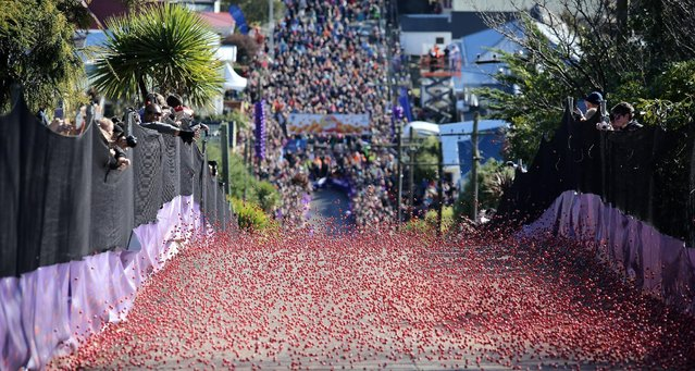 Spectators watch as thousands of Jaffa candies race down Baldwin Street on July 17, 2015 in Dunedin, New Zealand. The residential street is the steepest in the world and hosts the annual race to raise money for charity. (Photo by Rob Jefferies/Getty Images)