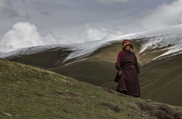 A Tibetan nomad takes a break from harvesting cordycep fungus on the 15th day of Saka Dawa, the holiest day of the Buddhist calendar on May 21, 2016 at the Sershul Monastery on the Tibetan Plateau in the Garze Tibetan Autonomous Prefecture of Sichuan province. (Photo by Kevin Frayer/Getty Images)