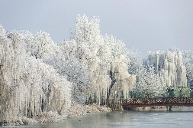 Hoarfrost covers the branches of willow trees on the shore of Sosto lake in Nyiregyhaza, northeastern Hungary, Friday, January 17, 2020. (Photo by Attila Balazs/MTI via AP Photo)