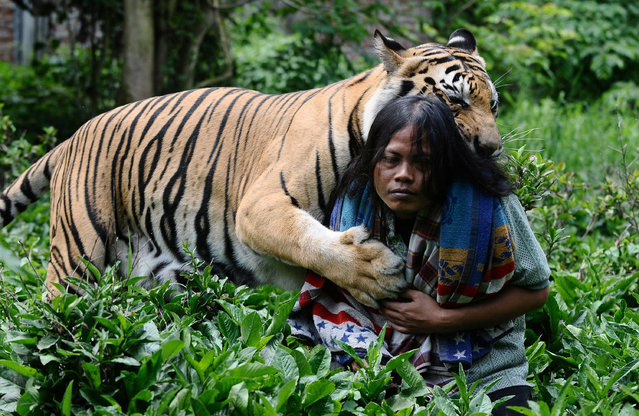 Tiger And Man Best Friends