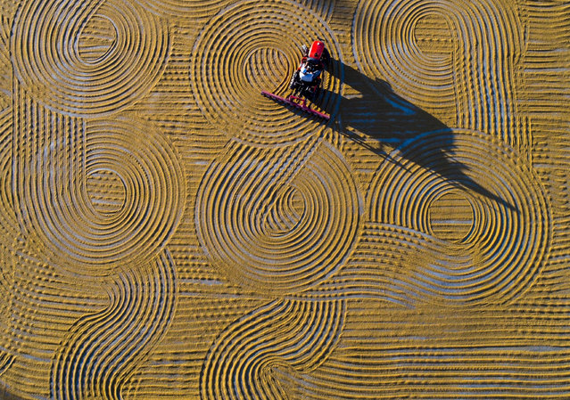 Workers spread bulgur wheat on a field with conventional techniques for drying under the sun in Gaziantep, which is the member of UNESCO Creative Cities Network on gastronomy, Turkey on September 8, 2017. (Photo by Mehmet Akif Parlak/Anadolu Agency/Getty Images)