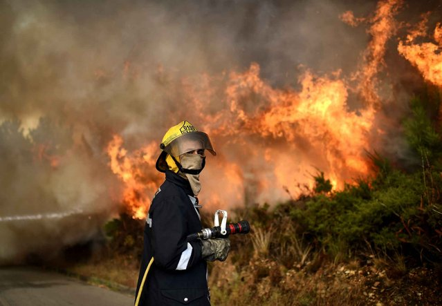 A firefighter prepares to takle a wildfire in Soutelo near Macinhata do Vouga, central Portugal, on August 9 2016. More than 3,000 people have been battling to contain roughly 100 fires across the country with 12 major blazes leading to the evacuation of local residents overnight. (Photo by Francisco Leong/AFP Photo)