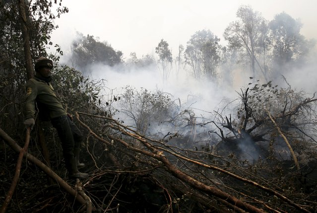 A worker takes a break from extinguishing fire at a burning forest at the Pulo Geronggang village in Ogan Komering Ilir district in Indonesia South Sumatra province, September 11, 2015. (Photo by Reuters/Beawiharta)