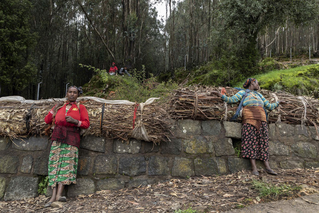 Mare Sorie, left, and her friend Tsehaynesh Golja, right, take a rest as they carry bundles of firewood from the forest around Entoto mountain near Addis Ababa, Ethiopia Friday, July 17, 2020. (Photo by Mulugeta Ayene/AP Photo)