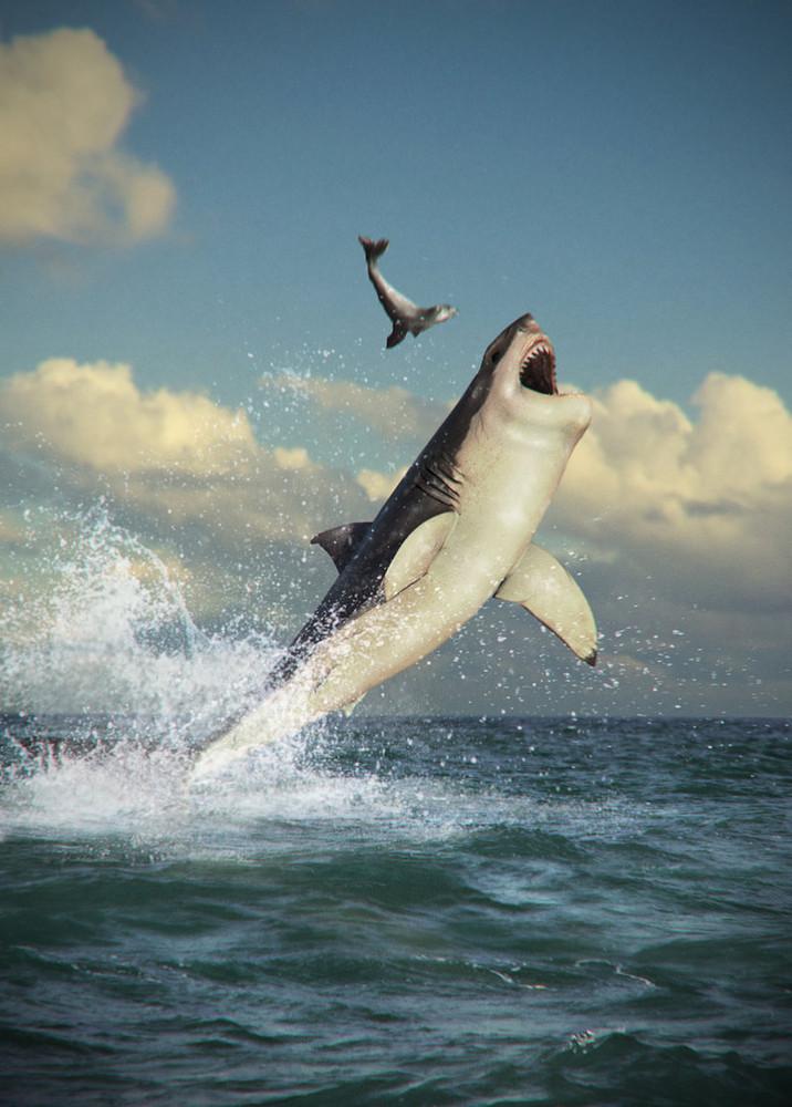 Perfect Predators: White Sharks