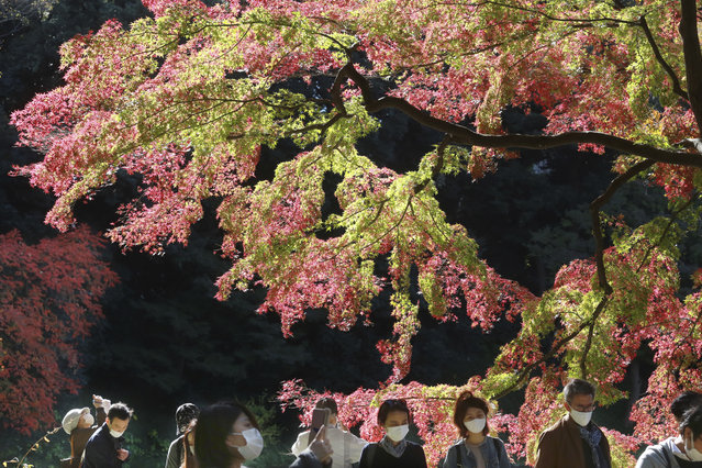 Visitors wearing face masks to protect against the spread of the coronavirus walk through the colorful autumn leaves at a park in Tokyo, Monday, November 23, 2020. (Photo by Koji Sasahara/AP Photo)