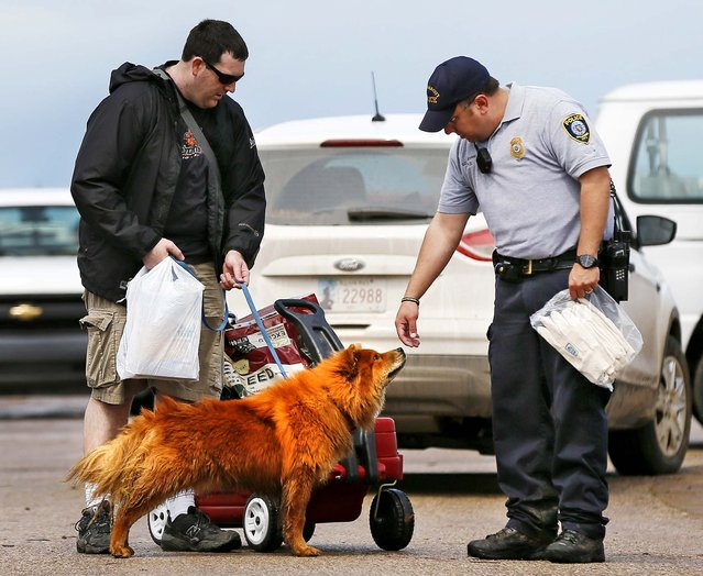 Stephen Peterson's dog, Chewbacca, sniffs the hand of Oklahoma City police Sgt. Shawn Byrne after Byrne gave Peterson a pair of gloves along on Tuesday. Peterson was walking from his home in Moore with a wagon of things he was able to salvage. (Photo by Nate Billings/The Oklahoman)