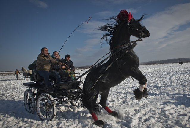 People sit in a carriage drawn by a horse during the traditional Epiphany celebration in the village of Pietrosani, Romania, on January 6, 2015. As every year, horse owners and their animals gathered on a field next to the village to be blessed by an orthodox priest and to take part in a horse race. (Photo by Daniel Mihailescu/AFP Photo)