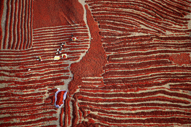 """""""Chilli harvest, China"""". Aerial perspective of the red chilli harvest season in Bayingolin Mongol prefecture, Xinjiang, China, when farmers pick and leave them to dry in the sun. Honourable mention: Open colour. (Photo by Hanbin Wang/SIPA Contest)"""