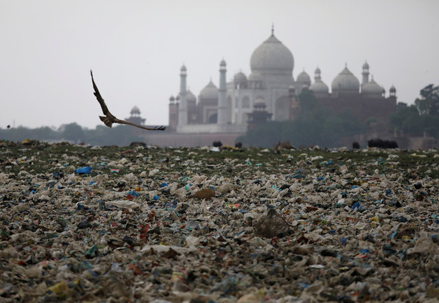 Garbage is seen on the polluted banks of the river Yamuna near the historic Taj Mahal in Agra, India, May 19, 2018. Picture taken May 19, 2018. (Photo by Saumya Khandelwal/Reuters)