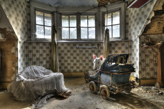 Claire in an abandoned villa in Belgium. (Photo by Alice van Kempen/Caters News)