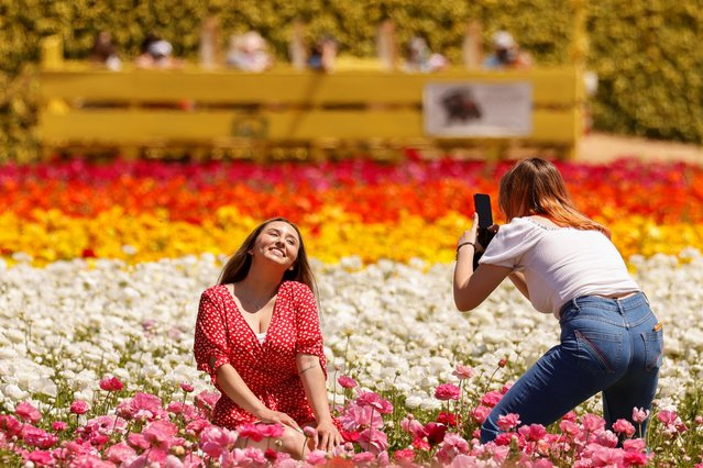 """Visitors pose and take pictures among the 50 acres of Ranunculus flowers at """"The Flower Fields"""" in Carlsbad, California, U.S., March 31, 2021. (Photo by Mike Blake/Reuters)"""