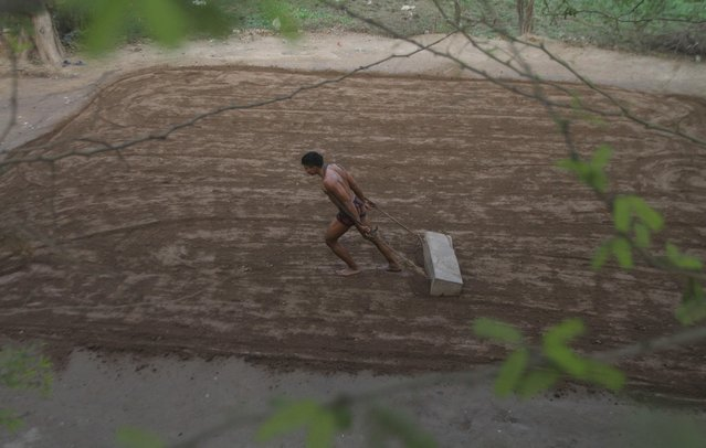 A Pakistani Kushti wrestler prepares the ground in the ring for a training session, in Lahore, Pakistan, Tuesday, January 5, 2016. Kushti, an Indo-Pakistani form of wrestling, is several thousand years old and is a national sport in Pakistan. (Photo by K.M. Chaudary/AP Photo)