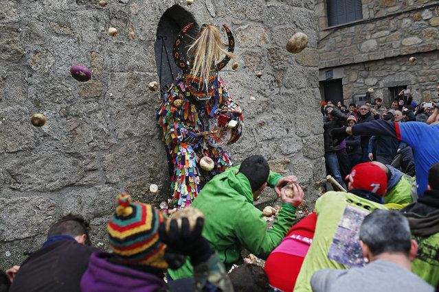 People throw turnips at the Jarramplas as he makes his way through the streets beating his drum during the Jarramplas festival in Piornal, Spain, Wednesday, January 20, 2016. Hundreds of people are running through the streets of a tiny town in southwestern Spain, chasing a fancy-dressed, beast-like figure and pelting it with turnips. (Photo by Francisco Seco/AP Photo)