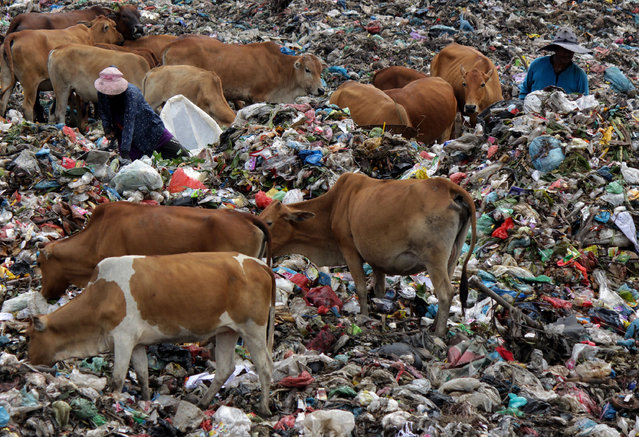 People collecting plastic waste at a landfill site in Lhokseumawe, Indonesia on November 24, 2018. (Photo by Maskur Has/SOPA Images/Rex Features/Shutterstock)