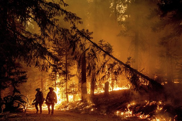 Firefighters light a backfire to stop the Dixie Fire from spreading near Prattville in Plumas County, Calif., on Friday, July 23, 2021. (Photo by Noah Berger/AP Photo)