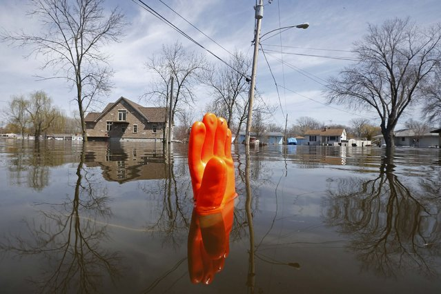 A rubber glove being used as a marker bobs in the water after flooding in Fox Lake, Illinois April 22, 2013. (Photo by Jim Young/Reuters)