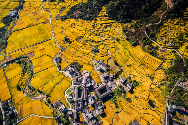 And they were all yellow. Uncredited landscape shot. (Photo by SkyPixel)