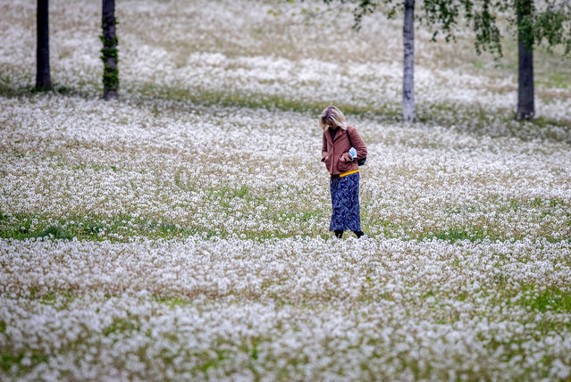 A woman walks between dandelions in a small park in Frankfurt, Germany, Wednesday, May 12, 2021. (Photo by Michael Probst/AP Photo)