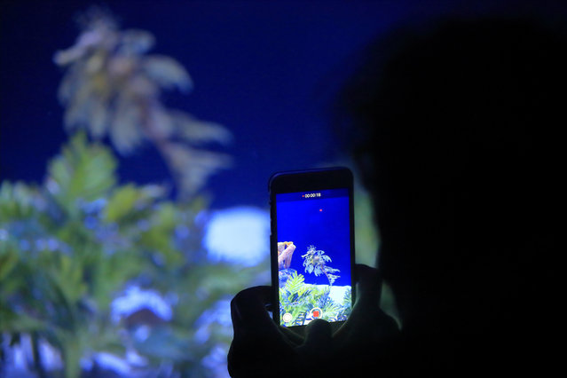 In this Friday, May 17, 2019 photo, a woman records an image of a sea dragon at the Birch Aquarium at the Scripps Institution of Oceanography at the University of California San Diego in San Diego. The Southern California aquarium has built what is believed to be one of the world's largest habitats for the surreal and mythical sea dragons outside Australia, where the native populations are threatened by pollution, warming oceans and the illegal pet and alternative medicine trades. (Photo by Gregory Bull/AP Photo)