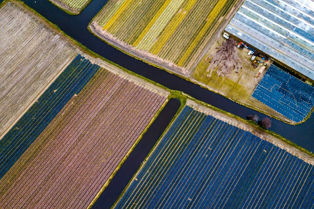 A photo taken with a drone shows flower fields near Lisse, The Netherlands on April 6, 2019. The flowers attract many tourists from home and abroad every year. (Photo by Rob Engelaar/EPA/EFE)