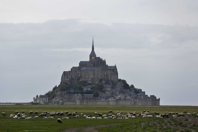 Sheeps graze in the fields around the Mont Saint Michel, Wednesday, May 8, 2018, in western France. (Photo by Thibault Camus/AP Photo)