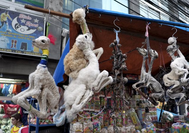 "Llama fetuses which serve as part of the offerings for the ""Pachamama"" (Mother Earth) are seen at the witch doctor's street in La Paz, Bolivia July 31, 2015. (Photo by David Mercado/Reuters)"