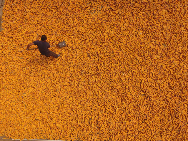 Harvesting corn in Shandong province, in Liaocheng, China on September 19, 2016. (Photo by Sipa Asia/Rex Features/Shutterstock)